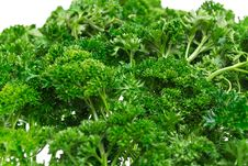 Free Juicy Green Parsley, Isolated On A White Royalty Free Stock Images - 21291079