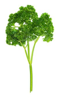 Free Green, Fresh Parsley, Juicy Isolated Stock Image - 21291101