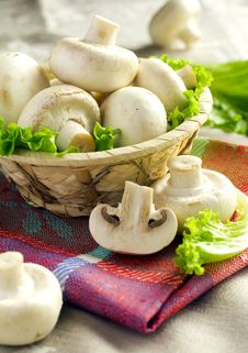 Free Mushrooms Royalty Free Stock Photo - 21291785