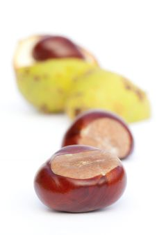 Free Chestnut Stock Photos - 21292233