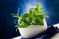 Free Herbs Highlighted By Spot Light Stock Photo - 21292620