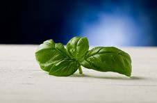 Free Basil Leaves On Wooden Table Highlighted By Spot Stock Photos - 21292653