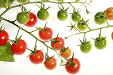 Free Cherry Tomatoes Stock Image - 21292751