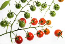 Free Cherry Tomatoes Stock Images - 21292754