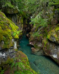 Free Avalanche Creek Gorge, Glacier National Park Stock Photos - 21294653
