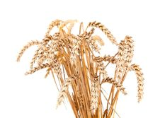 Free Ears Of Wheat Stock Photo - 21295620