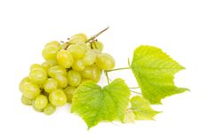 Free Bunch Of Grapes Royalty Free Stock Photos - 21295768