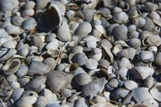 Free Shells On The Island Royalty Free Stock Photography - 21296367