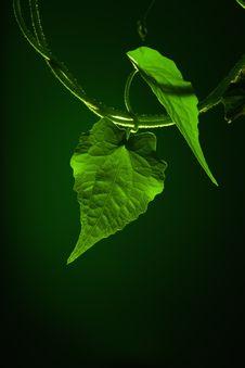 Free Leaf Royalty Free Stock Photos - 21297418