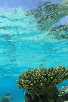 Free Tropical Coral Reef Stock Photo - 21297830
