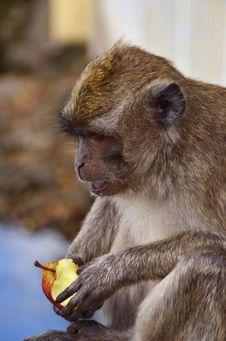 Free The Monkey Stock Photos - 21298573