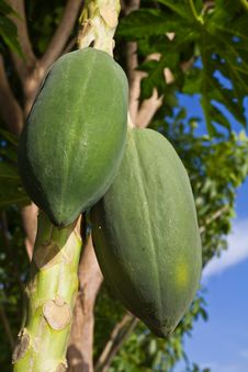 Free Papaya Stock Photos - 21298603