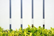 Free White Fence  Green Grass Stock Images - 21298784