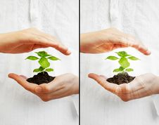 Free Save The Planet - Young Plant Stock Images - 21298914