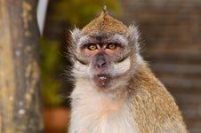Free The Monkey Royalty Free Stock Image - 21299586