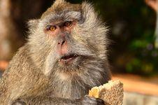 Free The Monkey Stock Photos - 21299733