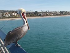 Free Pelican View Of The Beach Stock Photo - 2130380