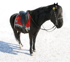 Free Black Horse. Royalty Free Stock Images - 2134859