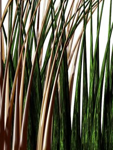 Grass Perspective 2 Royalty Free Stock Images