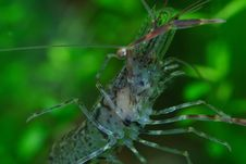 Shrimp 12 Stock Photos