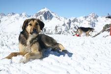 Free Mountain Dog Stock Photos - 2138083