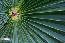 Free Macro Palm Stock Image - 2139461