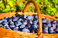 Free Plums In The Basket Stock Images - 21306274