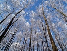 Free Winter Forest-horizontal Royalty Free Stock Photo - 21301225