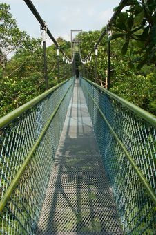 Free Tree Top Walk Stock Photos - 21301273