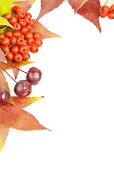 Free Fall Leaves And Berries Decoration Frame Royalty Free Stock Images - 21301409