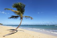 Free Coconut Beach Royalty Free Stock Images - 21304039