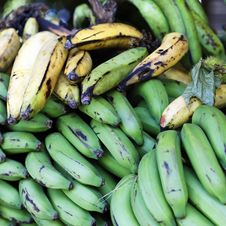 Free Green And Yellow Bananas Stock Photos - 21304123