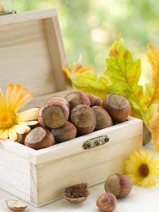 Free Hazelnuts Royalty Free Stock Images - 21305209