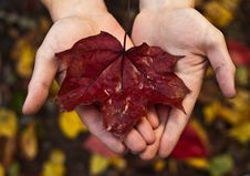 Free Red Maple Leaf In Autumn Stock Image - 21305231