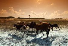 Free Desert Goats Royalty Free Stock Photo - 21306995