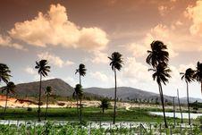 Free Sunrise Palm Royalty Free Stock Photos - 21307148