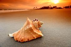 Free Shell Royalty Free Stock Photo - 21307275