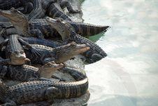 Free Reptile Pile Stock Photo - 21308110