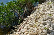 Free Retaining Wall With Mangroves Royalty Free Stock Photo - 21308265