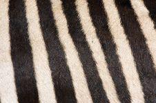 Free Zebra Fur Background Stock Photos - 21308923