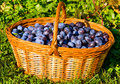 Free Plums In The Basket Stock Photo - 21310710