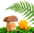 Free Mushrooms And Fern Royalty Free Stock Photography - 21318877