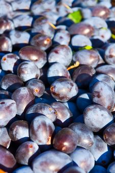 Free Plums Royalty Free Stock Photos - 21310618