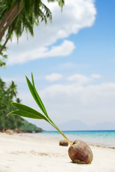 Free Coconut Stock Photography - 21310772