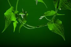 Free Green Stock Images - 21310824