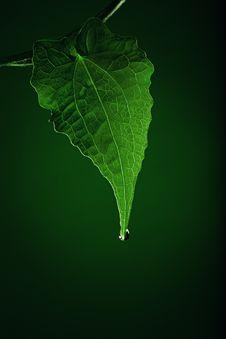 Free Green Stock Image - 21311011