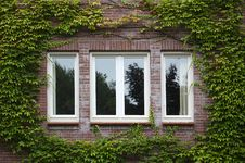 Free Windows Framed With Ivy Stock Photo - 21313040