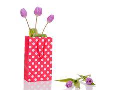 Free Three Purple Tulips Stock Photos - 21315183