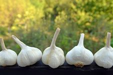 Free Garlic Royalty Free Stock Photos - 21315298
