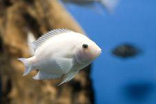 Free White Fish Stock Images - 21315644